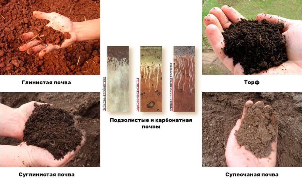виды почв в спб и ло
