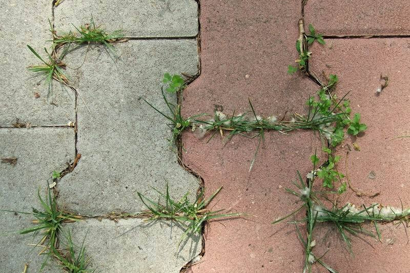как бороться с травой между плиткой фото